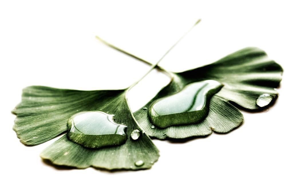 Tinnitus mit Tebonin, Ginkobil oder Gingium behandeln?Studien, Tests, Erfahrungen zu Ginkgo-Medikamenten